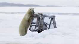 Natuur op 2: Polar Bear family and me Natuur op 2: De IJsberenfamilie en ik Deel 1 : Lente