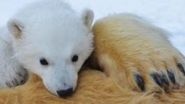 Natuur Op 2 - Natuur Op 2: De Ijsberenfamilie En Ik Deel 2: Zomer