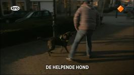 Kruispunt - De Helpende Hond