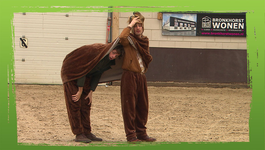 De Buitendienst Van Nieuws Uit De Natuur - Paarden