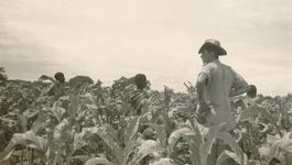 Andere Tijden - Blanke Boeren Zonder Erf