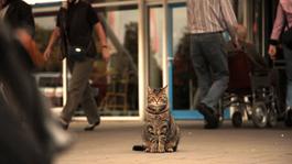 Human Doc - Wat De Kat Ziet