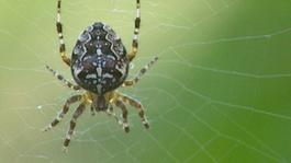 Het Klokhuis - Spinnen