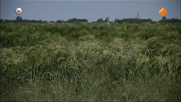 Fryslân Dok - De Dijk