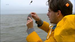De Buitendienst Van Nieuws Uit De Natuur - Voelen Vissen Pijn?