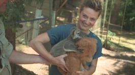 Het Klokhuis - Koala