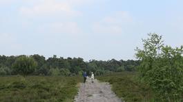 Baardmannetjes - Maasduinen