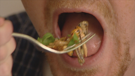 Het Klokhuis - Insecteneter