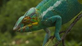 Natuur Op 2: Madagascar - Land Van Hitte En Stof