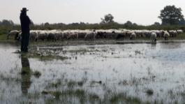2doc: - De Stress Van De Herder