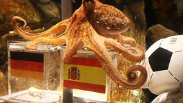 VPRO Import The Life and Times of Paul the Psychic Octopus