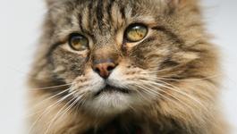 Het Verborgen Leven Van De Kat - De Leeuw Op Jouw Schoot