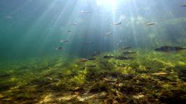Wildernis Onder Water - Een Spectaculaire Reis
