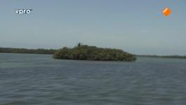 Freeks Wilde Wereld - Belize - Koraal