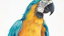 Schilderen Met Gary Jenkins - Blauwgouden Ara