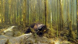 Wildernis Onder Water - De Monding Van De Grote Rivieren