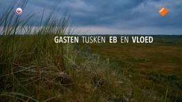 Fryslân Dok - Vogelvrij Op Vlieland