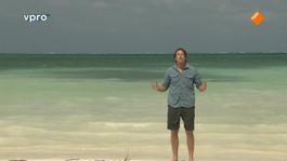 Freeks Wilde Wereld - Belize - Reuzen Van De Zee