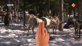 Freeks Wilde Wereld - Zweden - Rennende Dieren