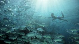 Natuur Op 2: Human Planet - Oceanen