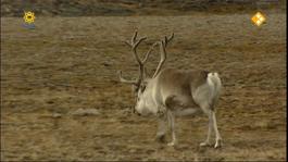 Dierenmanieren Op Reis - Spitsbergen (1/2)