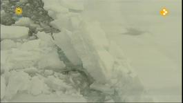 Dierenmanieren Op Reis - Spitsbergen (2/2)