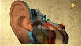 Bio-bits Bovenbouw: De Maakbare Mens - Erfelijke Ziektes