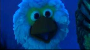 Pino zingt over blauw