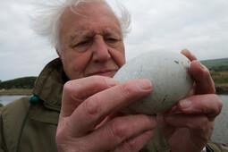 Attenboroughs wonderbaarlijke eieren