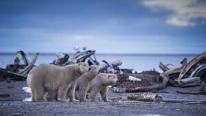 Natuur op 2: Wild Alaska - de laatste wildernis Zomer (2/3)
