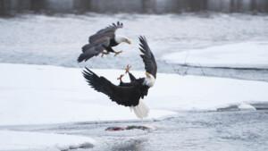 Natuur op 2: Wild Alaska - de laatste wildernis Winter (3/3)