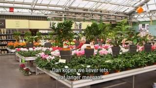 Groeten Uit Holland - Nederlandse Vrienden