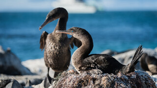 Missie Galapagos Geheimen van de diepte