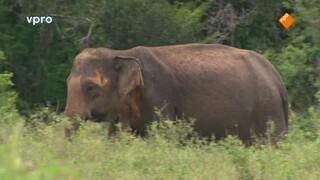 Freeks wilde wereld Een olifantenbad