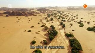 Giraffen: Afrika's vriendelijke reuzen