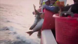 De Engelse kok en de Schotse visserman