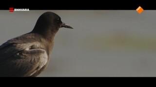Vroege Vogels Levende Rivier
