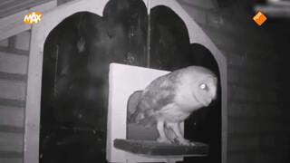 Broedende vogels live te volgen via internet