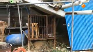 Schaatser Blokhuijsen door het stof na kritiek op eten hondenvlees
