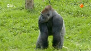 The Zoo - Populariteitswedstrijd
