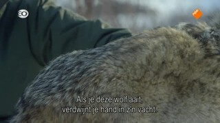 Sneeuwdieren - Sneeuwdieren