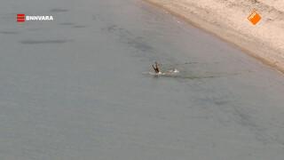 Maurice duikt in het Siberische Baikalmeer