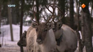 Freeks wilde wereld: Zweden