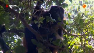 Ryanne oefent haar apenlokroep op de Mombacho vulkaan