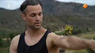 Cactus koppen