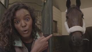 Paardenrevalidatie
