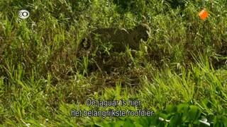 Natuur Op 2 - Natuur Op 2: Jaguars, De Superkatten Van Brazilië
