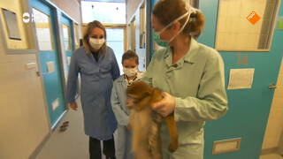 Hoe worden dieren verzorgd bij stichting AAP?