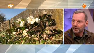 André Donker: winterbloeiers overleven door natuurlijke antivries