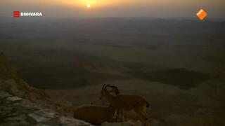 Evi spot de zonsopkomst in de Negev-woestijn